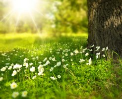 太陽と春の花
