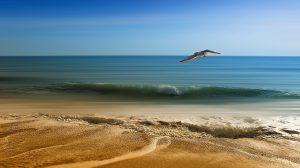 カモメと海